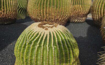 Jardín del Cactus